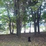 Monsieur le chien qui attend un écureuil..