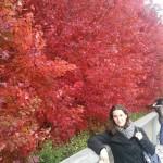 Magnifiques couleurs dans ce parc!
